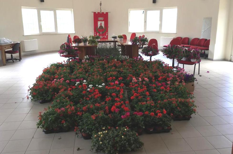 Donate a Jenne 600 piantine ornamentali dalla Ortoflorovivaistica Remo di Meo di Nettuno